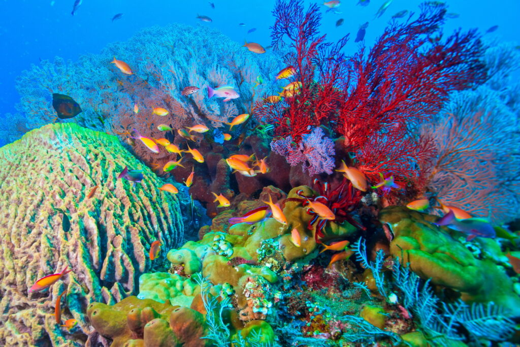 coral fish in coral reef