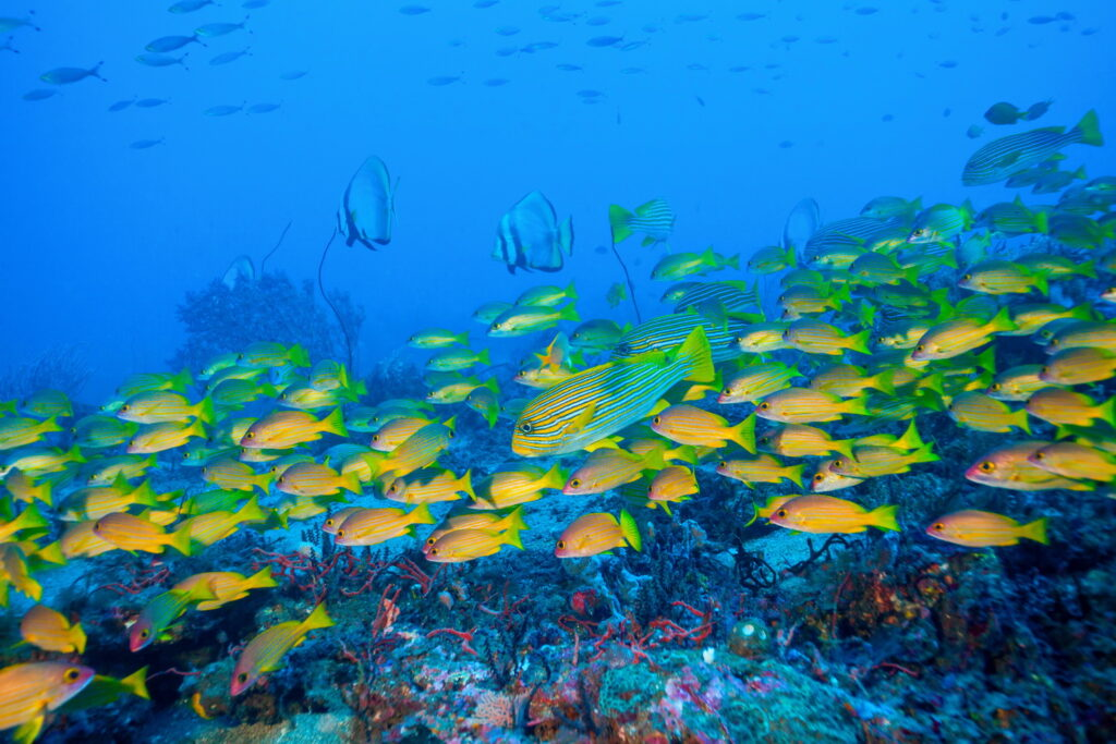 school of fish and butterfly fish