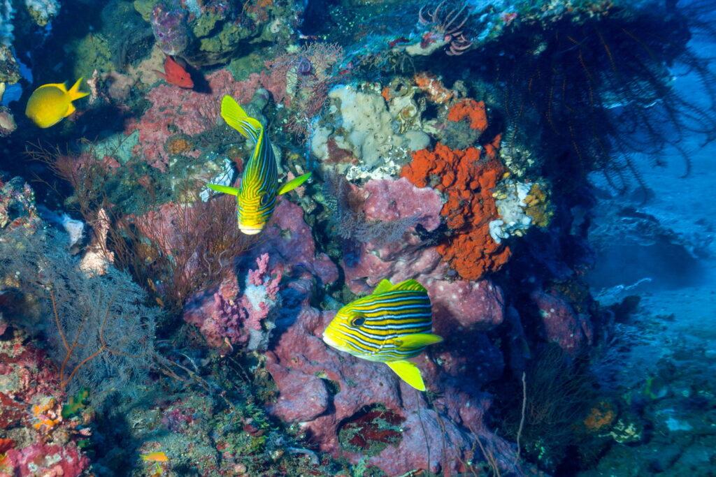 Coral y peces de coral en el sitio de buceo