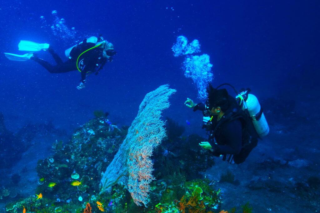 Buceadoras en el mar lejos
