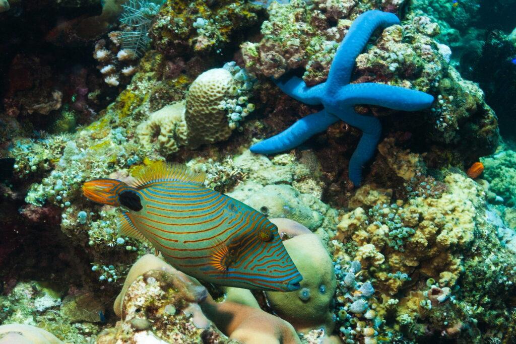 estrella de mar azul y pescado