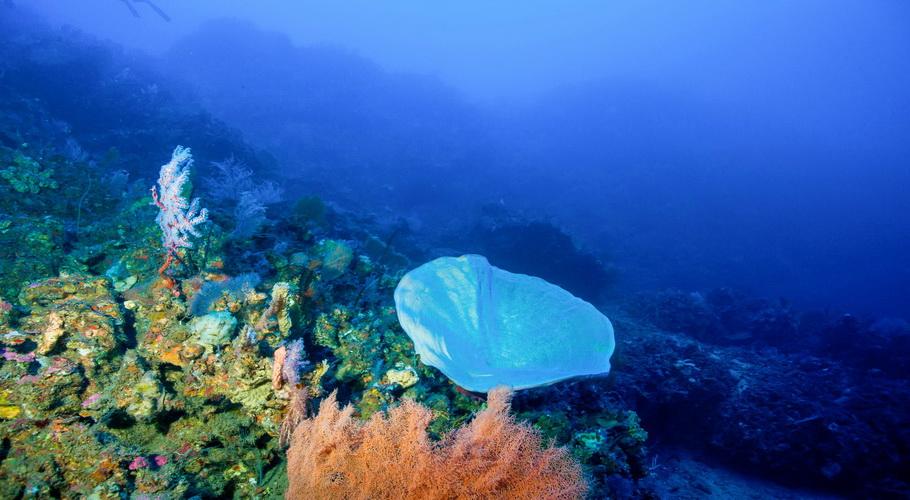 enorme esponja en el sitio de buceo Amed Kusambi