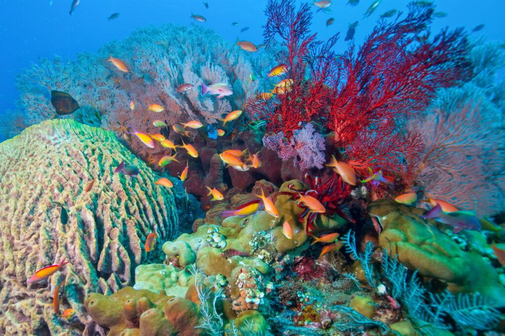poisson corail dans les récifs coralliens