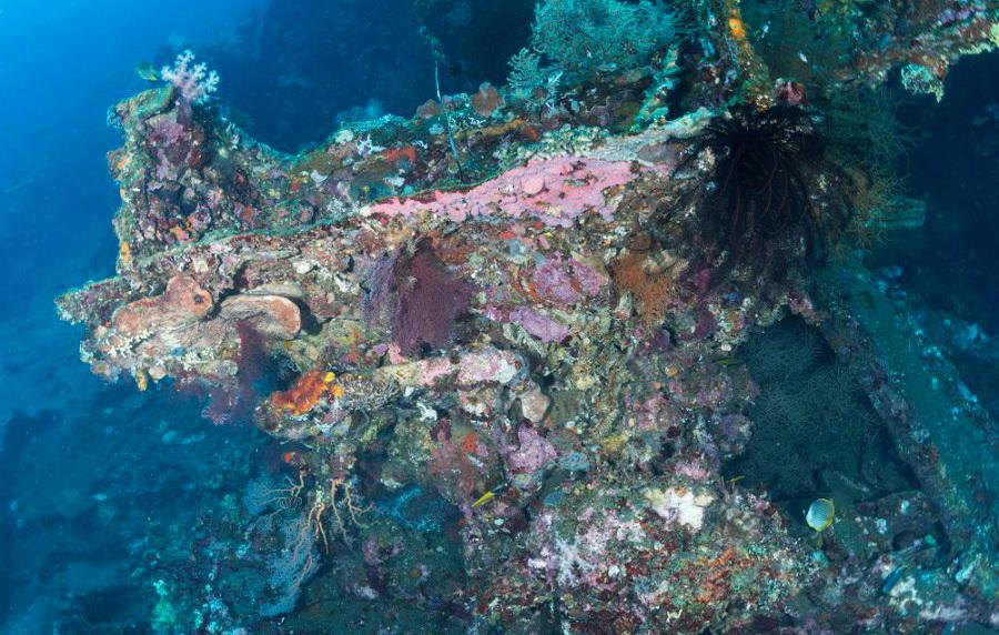 Koralle am japanischen Schiffswrack