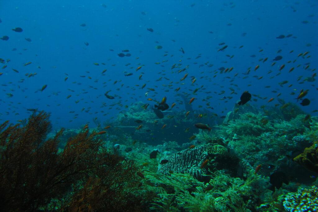 Coral y peces de coral en el sitio de buceo del área de Amed