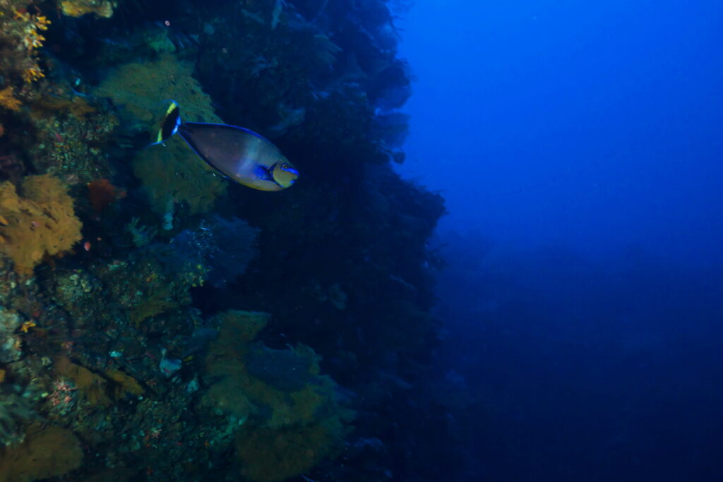 underwater canyon at blue moon dive site