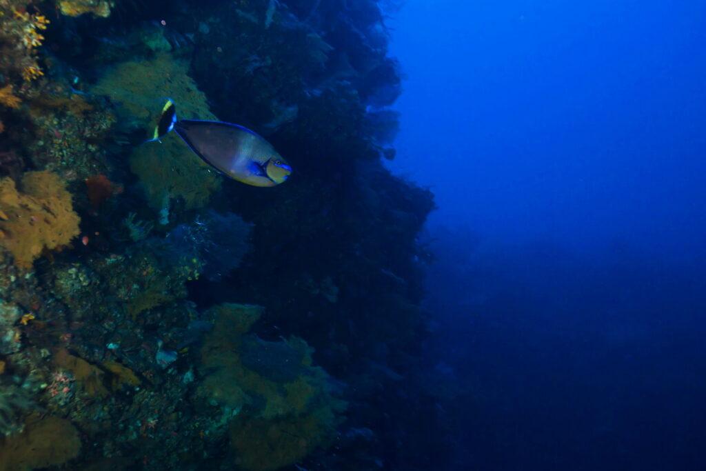pared en el sitio de buceo Amed