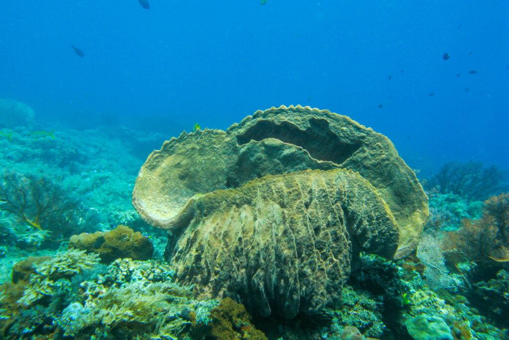 esponja en el sitio de buceo del área de Amed