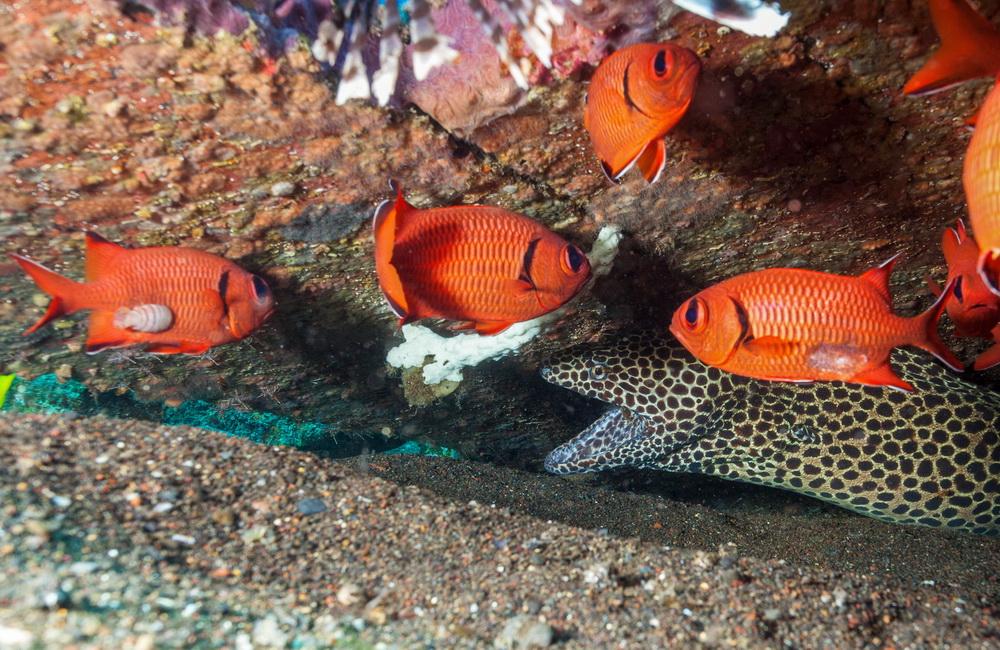 anguila morena en el sitio de buceo Amed