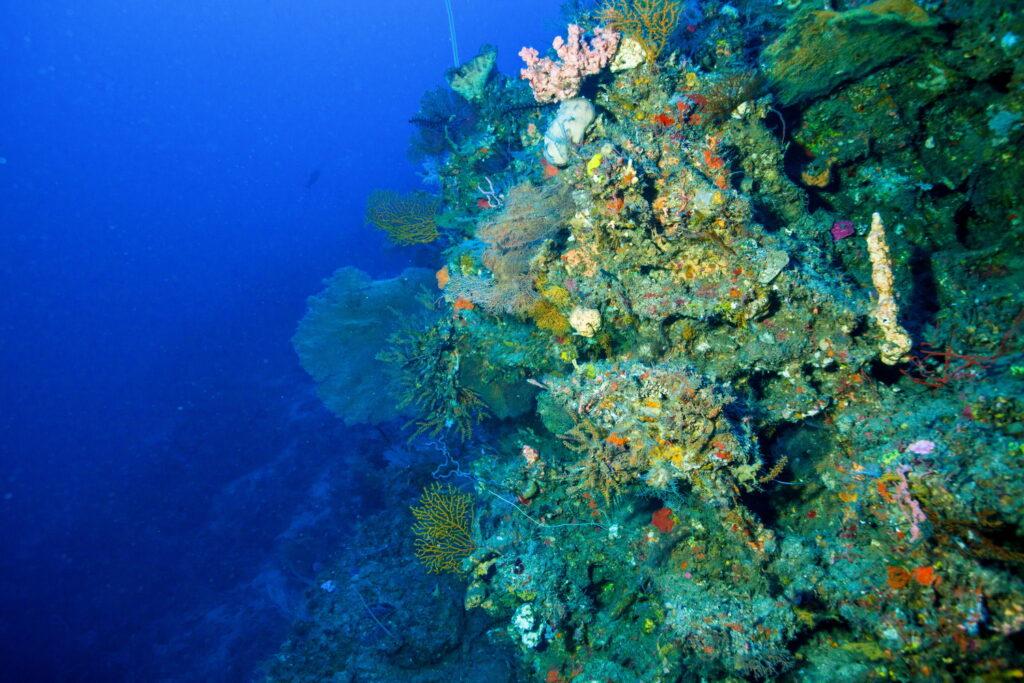 peces de coral y coral en el sitio de buceo Amed