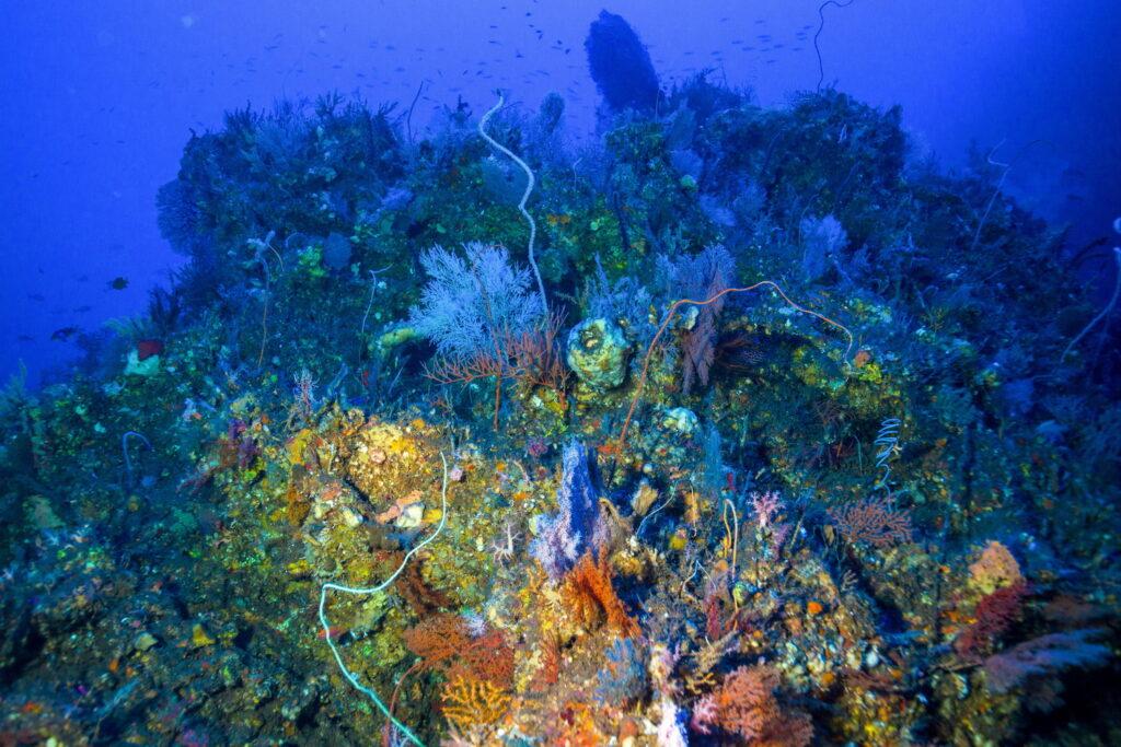récif de corail à Nusa Penida