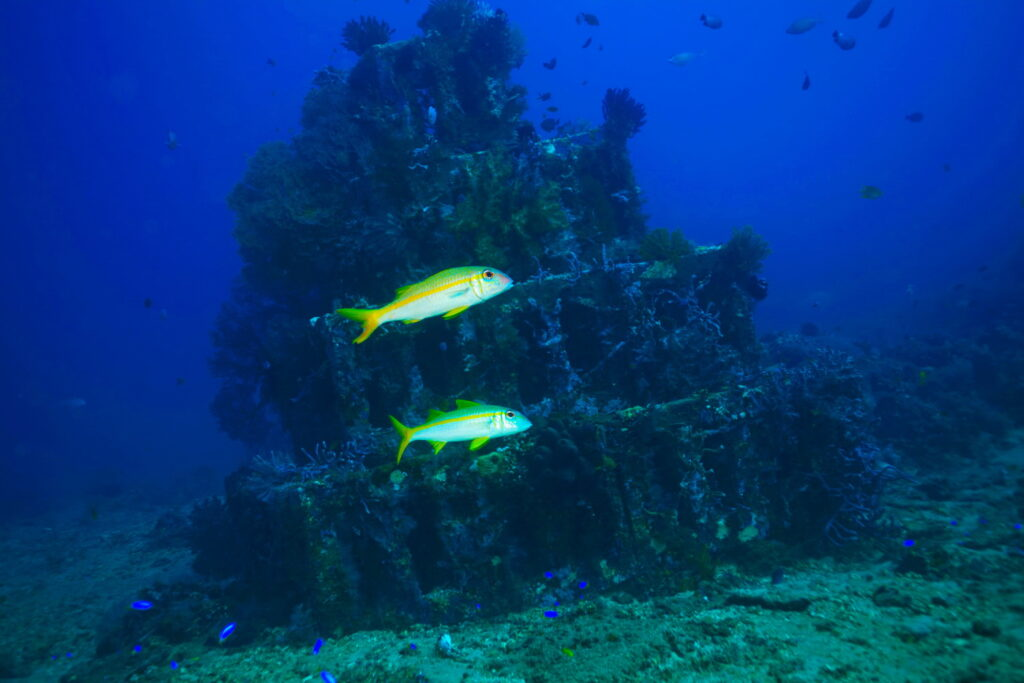 artificial reef at pyramids dive site