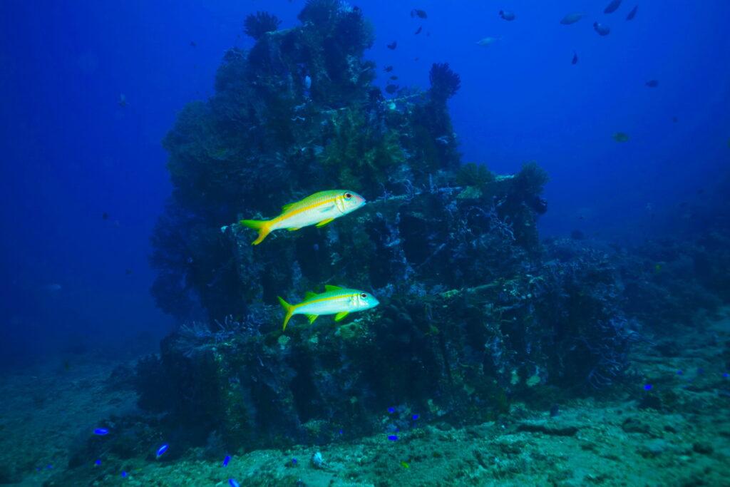 Sites de Plongée & Snorkeling Amed - récif artificiel sur le site de plongée des pyramides