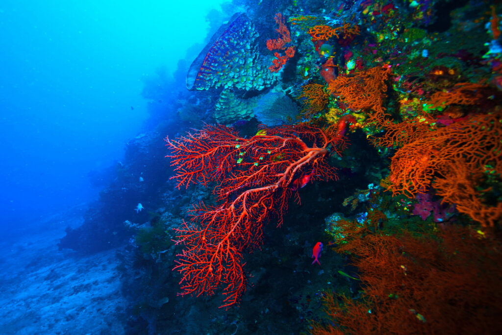 récif de corail en mer tropicale