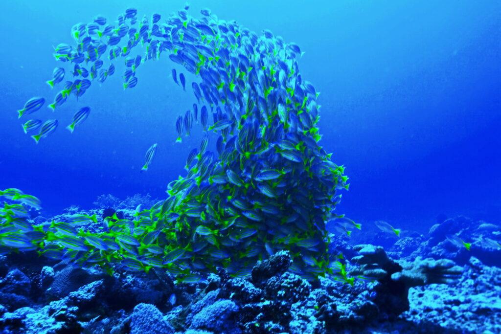 banco de peces en el sitio de buceo de Amed